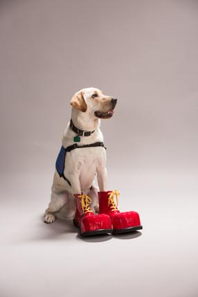 RMHC service dog Jax